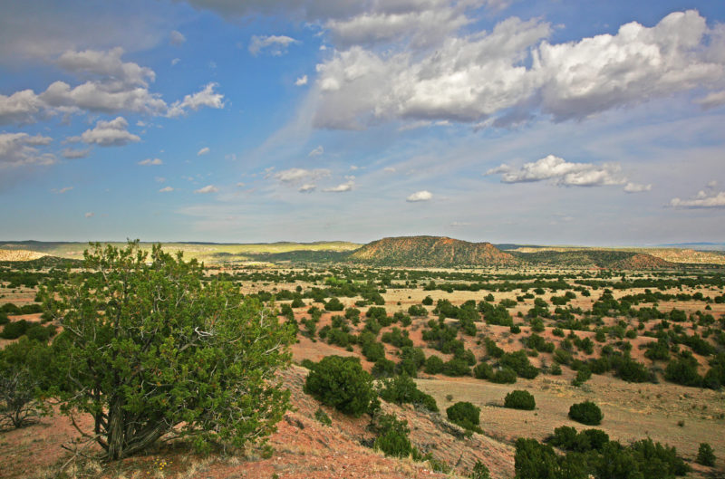 Spring time in the Galisteo Basin.