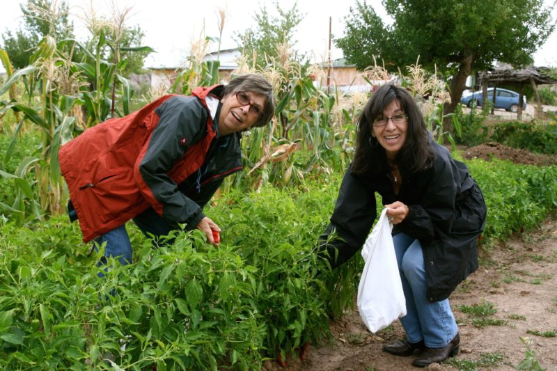 Lopez sisters Lydia Maestas and Martina Ellington picking chile on their family ranch in Santa Cruz, NM - Photo Alejandro Lopez
